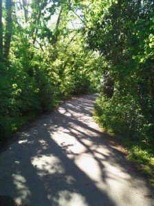 Path-pic-224x300