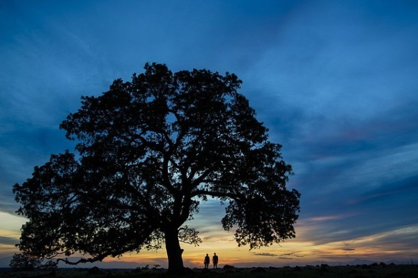 tree-1840586_640
