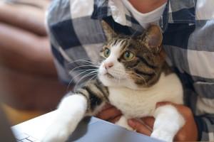 cat-5331883_1920