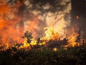 forest-fire-2268729_640